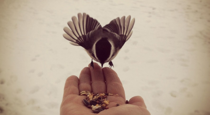 """Art in the palm of your hand"" Vicki and Chickadee Central New York"