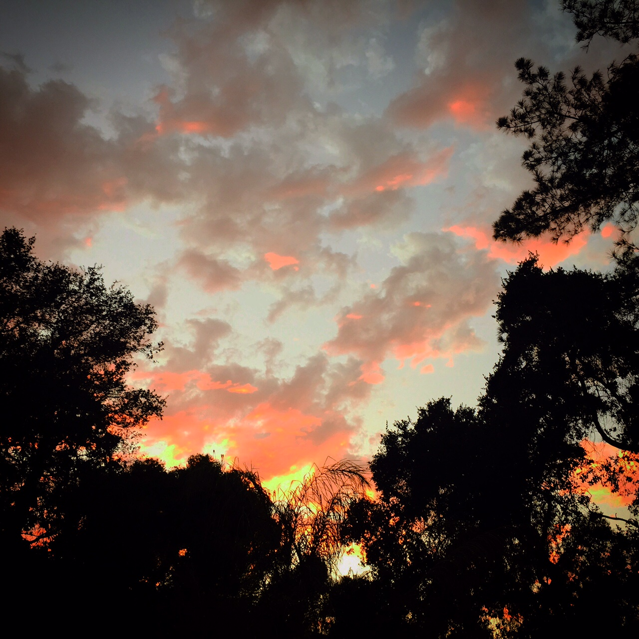Pink clouds over Topanga Indian Summer, September 2015